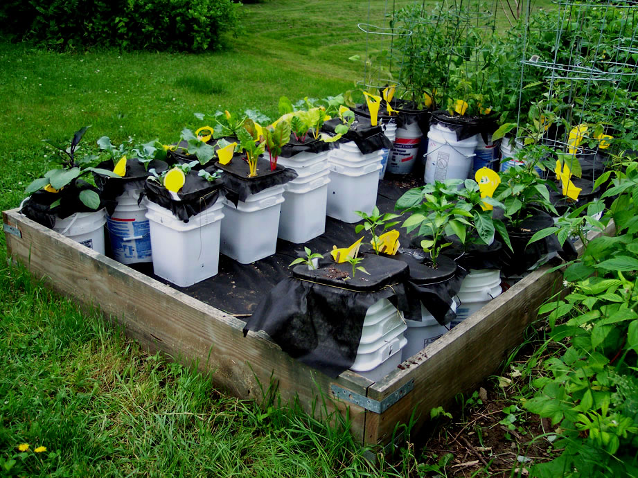 12 innovative diy self watering planters ideas and Self watering 5 gallon bucket garden