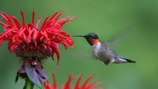 Top 10 Plants And Flowers That Attract Hummingbirds To Your Yard