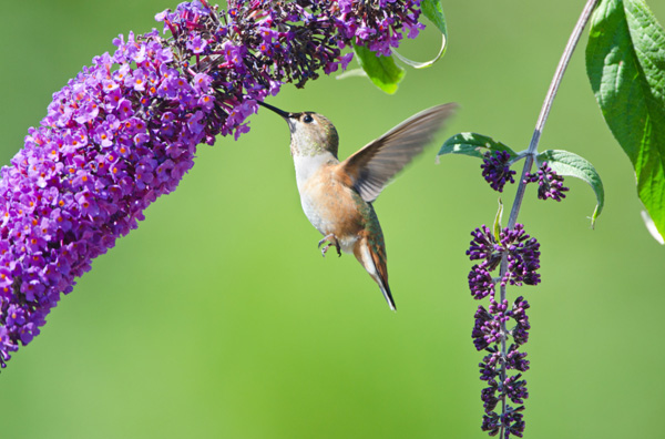 Top 10 Flowers That Attract Hummingbirds To Your Yard ...