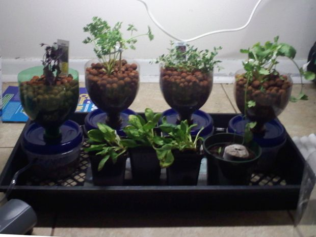 Cheap, and Expandable Hydroponics System