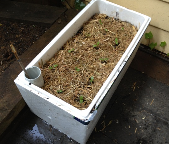 Foam box self watering system