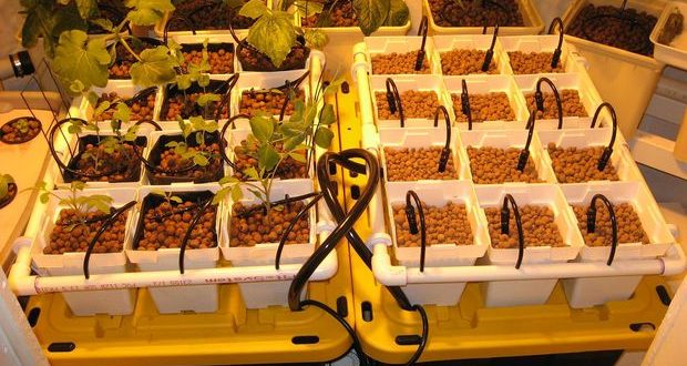 12 Innovative Diy Hydroponics Systems To Grow Soil Less