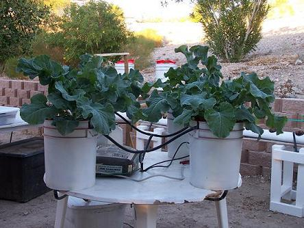 12 Innovative Homemade Hydroponics Systems The Self Sufficient
