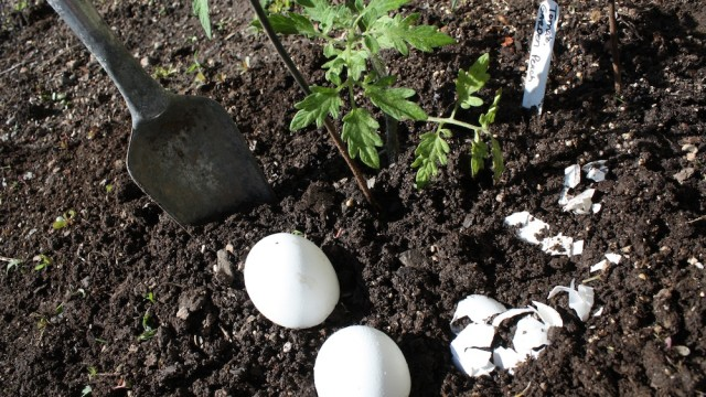 egg shell as a natural fertilizer