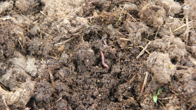 manure as a natural fertilizer