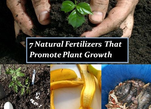 7 natural fertilizers that promote plant growth the self sufficient living - Organic flower fertilizer homemade solutions ...