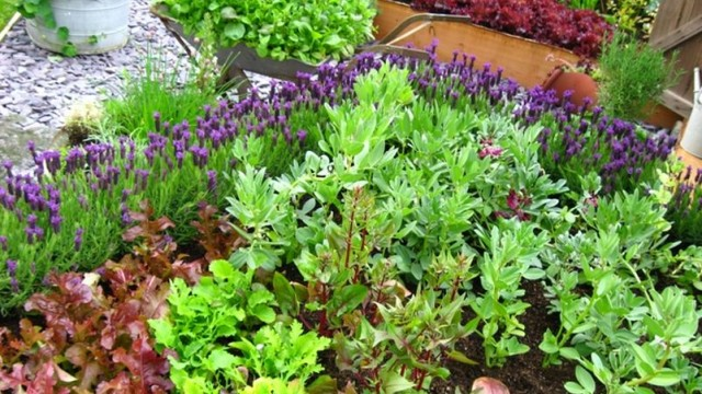 10 Tips to Starting a Vegetable Garden for Beginners The