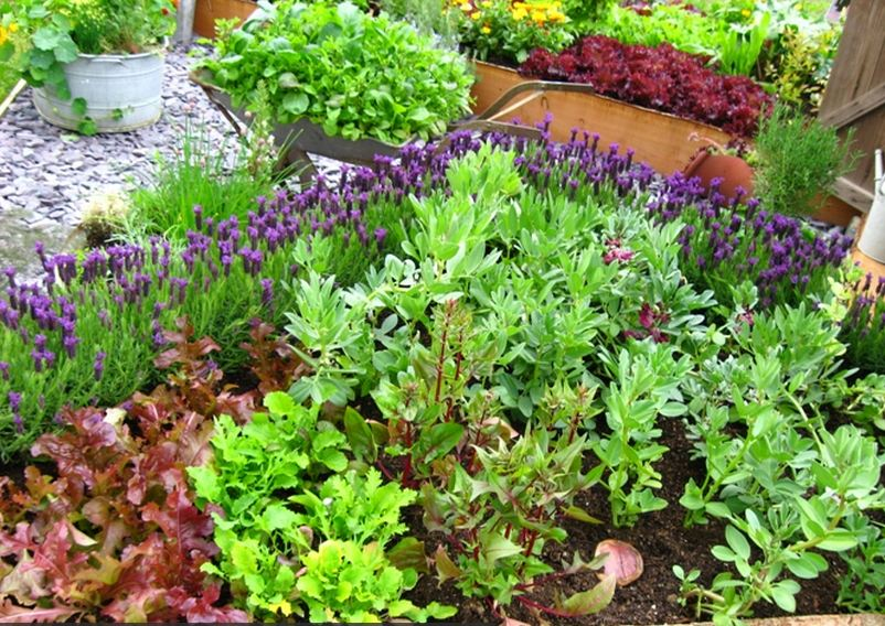 Nurturing A Vegetable Garden In Your House Is Beneficial In Several Ways. Vegetable  Gardening For Beginners Courses Are Widely Available In The Internet.