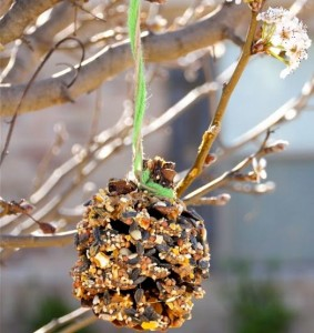 5 Minute Bird-Feeder