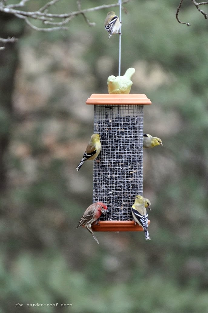 watch clever diy building feeders a feeder how bird to guidecentral home create youtube tutorial