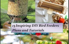 bird feeders4