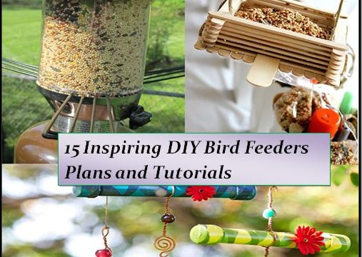 feeder youtube will bird garden birds diy feeders that your with building watch fill