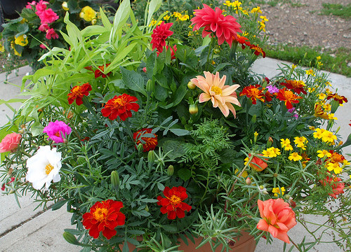Exotic A L together with Article together with Zinnia Profusion Series further 20 Creative Ways To Upcycle Pallets In Your Garden in addition 106890191130920198. on drought resistant garden ideas