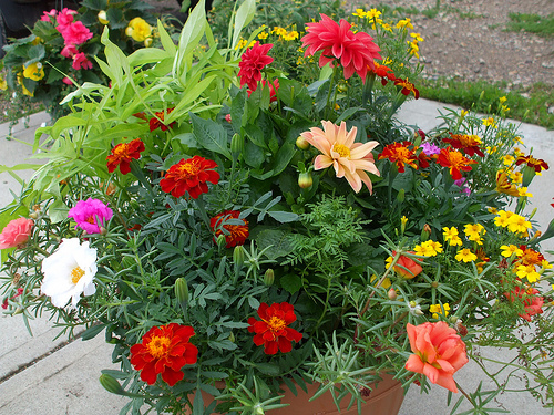 12 Best Drought Tolerant Plants Perennials And Annuals