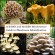 edible & inedibele mushrooms