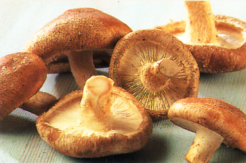 shiitake-mushrooms