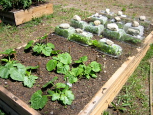 Boxes for large gardens