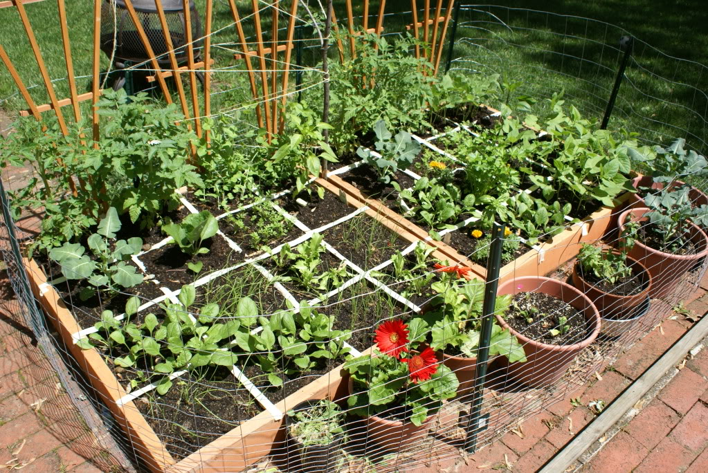 No Dig Square Foot Garden Layout: