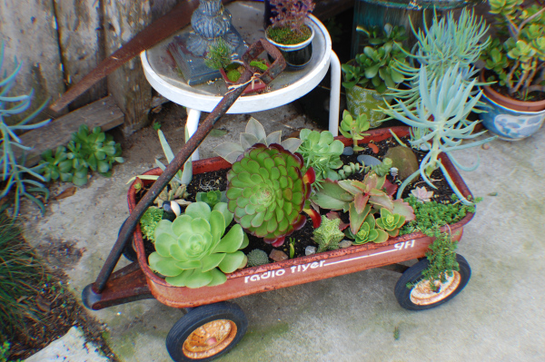 Rusty old radio flyer wagon as succulents container