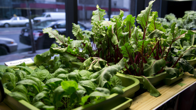 indoor vegetables and herbs