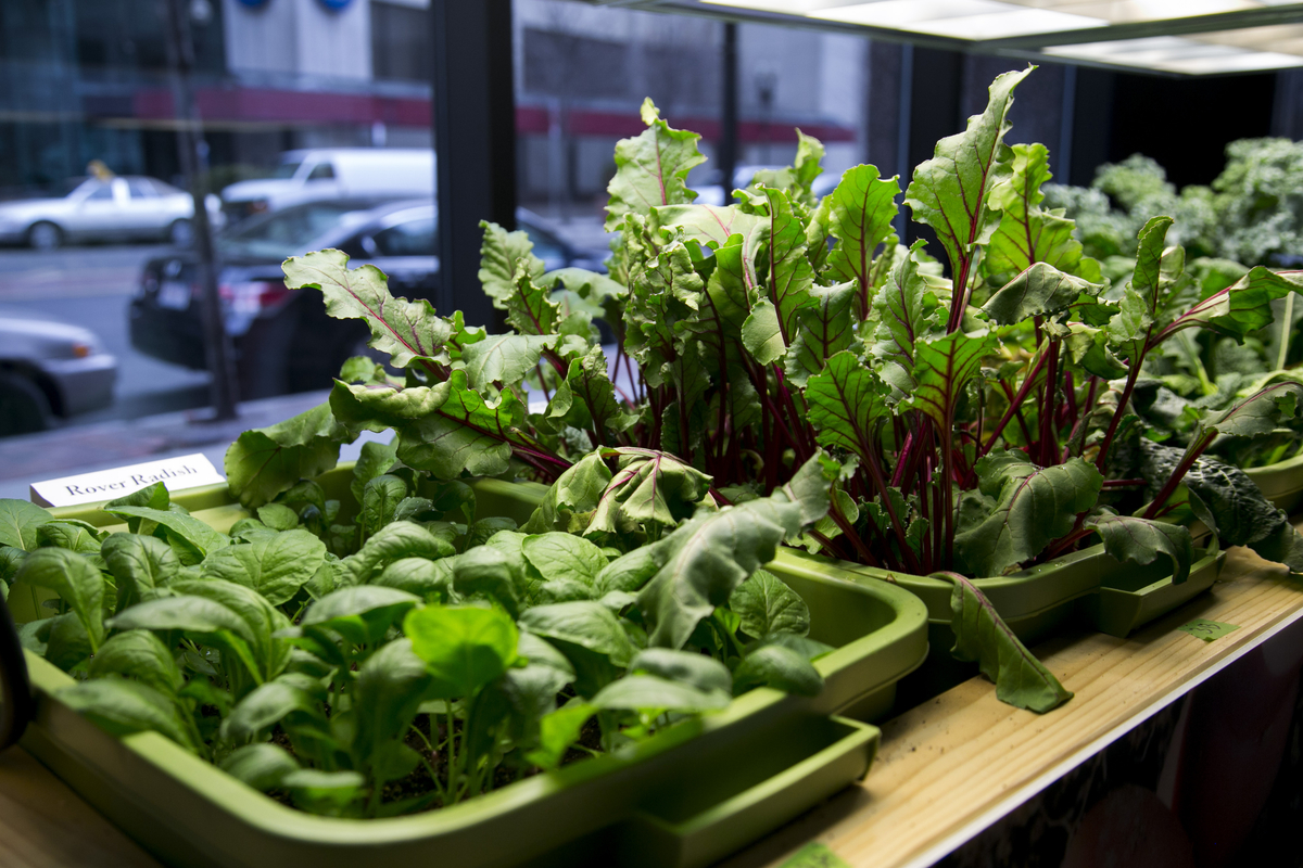 12 healthy vegetables and herbs to grow indoors the self