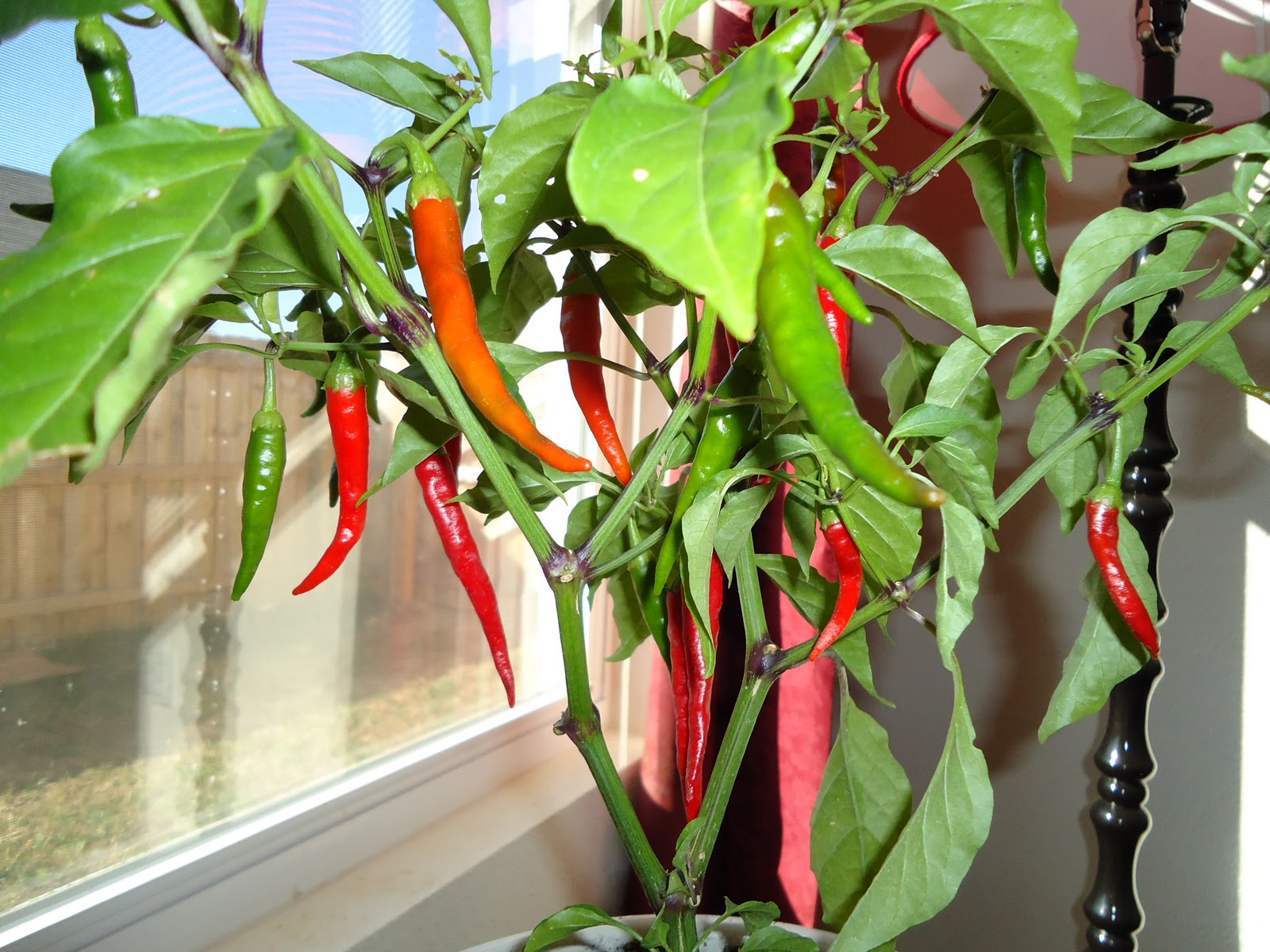 12 healthy vegetables and herbs to grow indoors the self sufficient living - Planting pepper garden ...