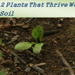 plants for clay soil4