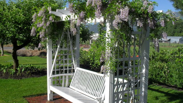 10 Best Flowering Vines For Arches Pergola Arbor And