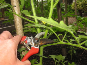 Pruning shears for cutting