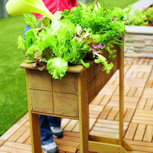 Salad Box for a Small Space