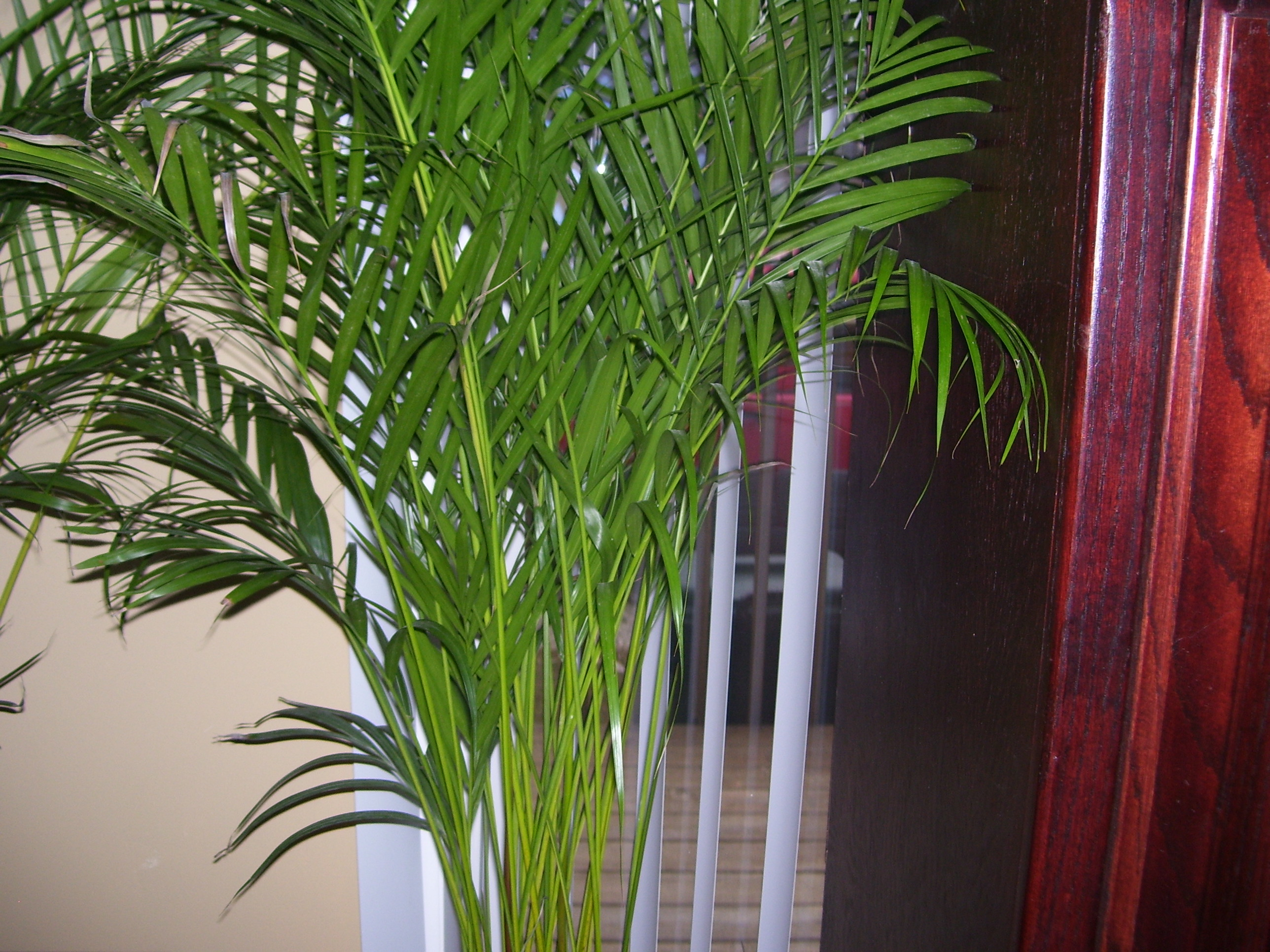 10 famous large and small indoor plants the self sufficient living - Suitable indoor plants ...