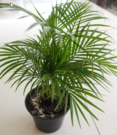 10 famous large and small indoor plants the self for Plants that live long