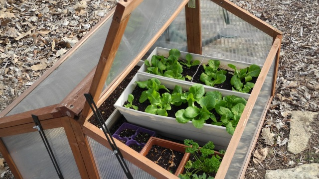 Guide To Cold frame Gardening Learn How To Get Started The Self