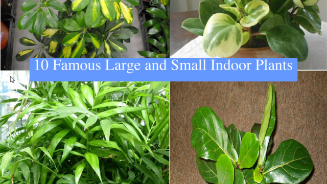 10 Famous Large And Small Indoor Plants The Self Sufficient Living
