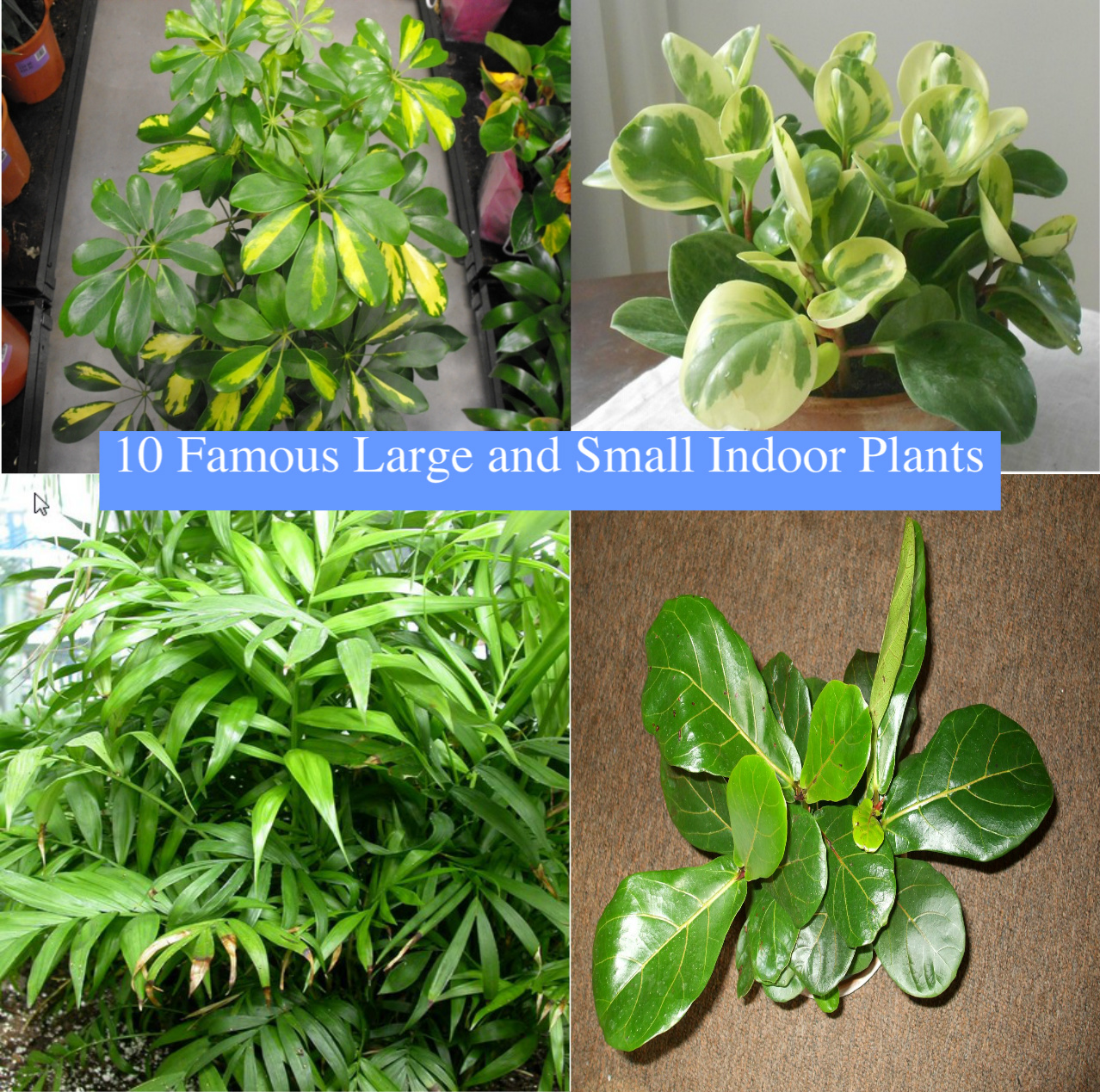 large and small indoor plants