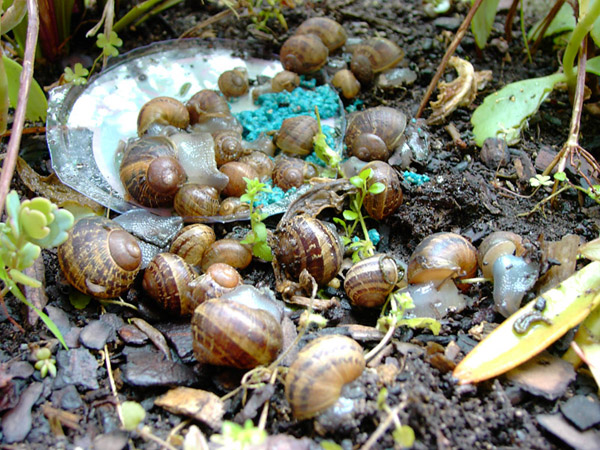 How To Rid Your Garden Of Slugs And Snails The Self Sufficient Living
