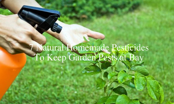7 Natural Homemade Pesticides To Keep Garden Pests At Bay The Self Sufficient Living