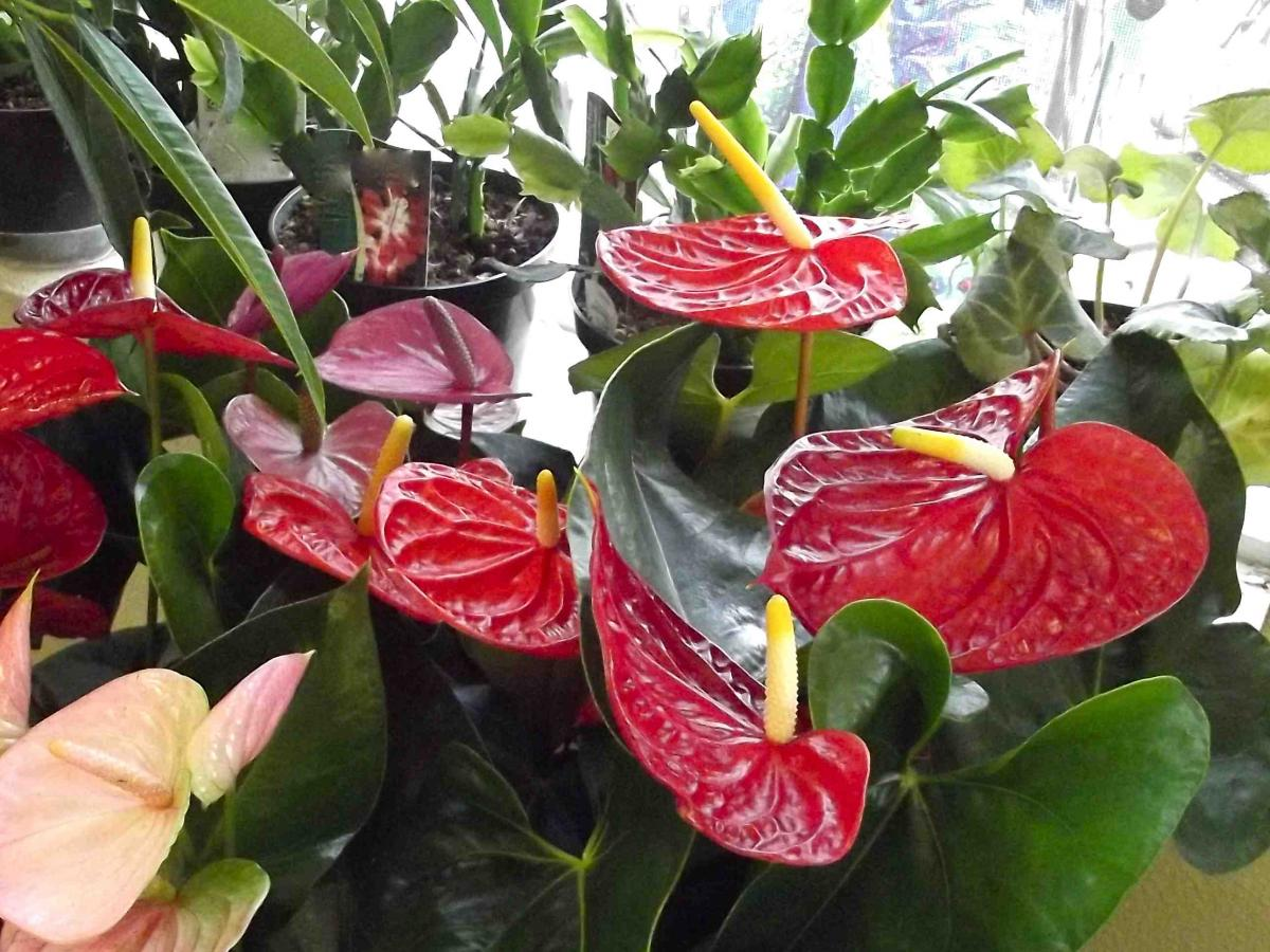 10 Tropical House Plants Any One Can Grow Indoors - The ...