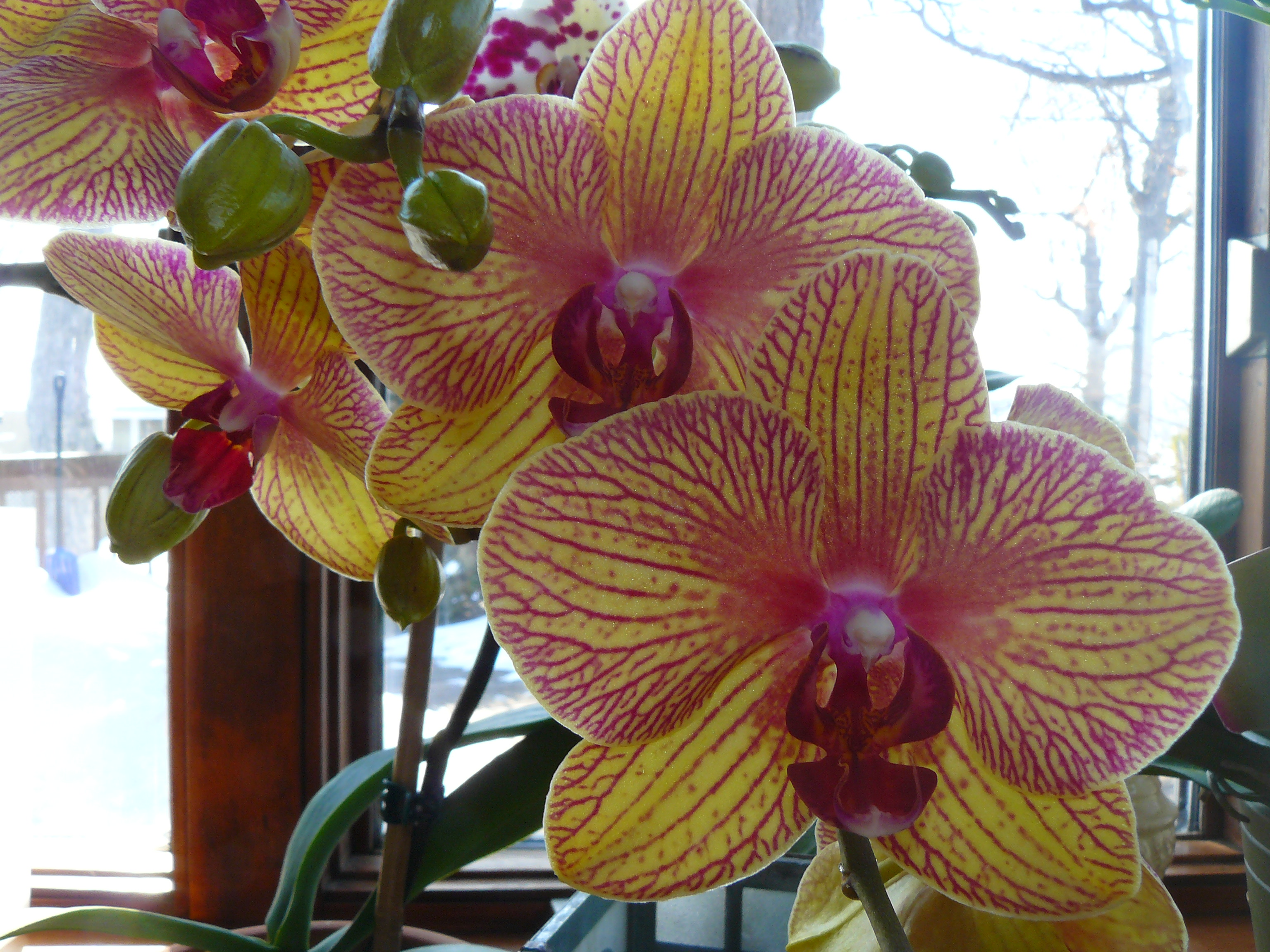 best orchid house plants. Orchids houseplants Top 10 Tropical House Plants Any One Can Grow  The Self