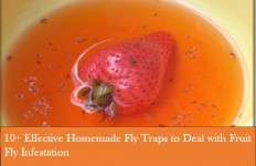homemade fruit fly trap healthy fruit pancakes