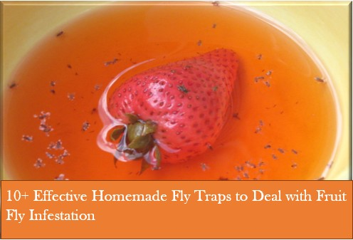 10+ Effective Homemade Fly Traps to Deal with Fruit Fly ...
