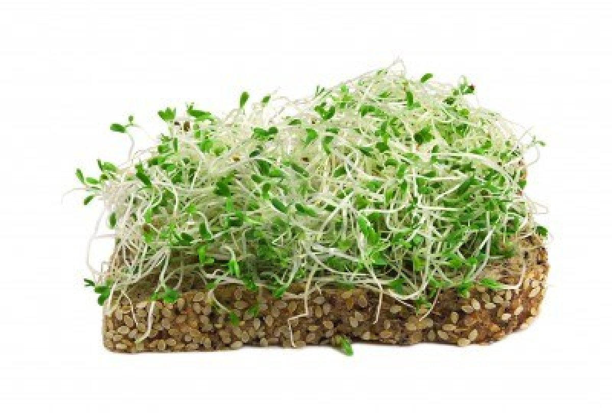Alfalfa Green Sprouts