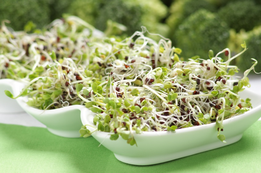 how to grow red clover sprouts