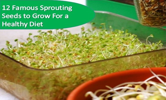 sprouting seeds to eat