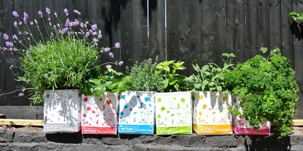 Mini Grow Bag Garden Idea