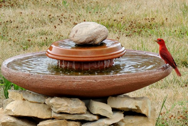 Rocky bird bath fountain