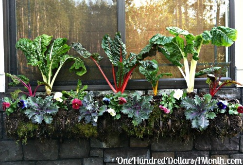 Window Box Garden Idea