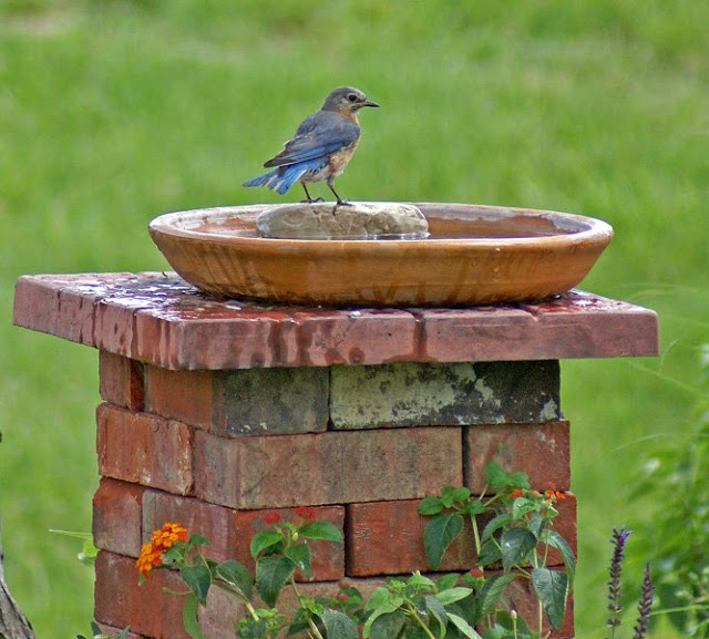 lovely bird bath