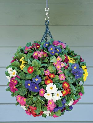 Hanging Basket Planter