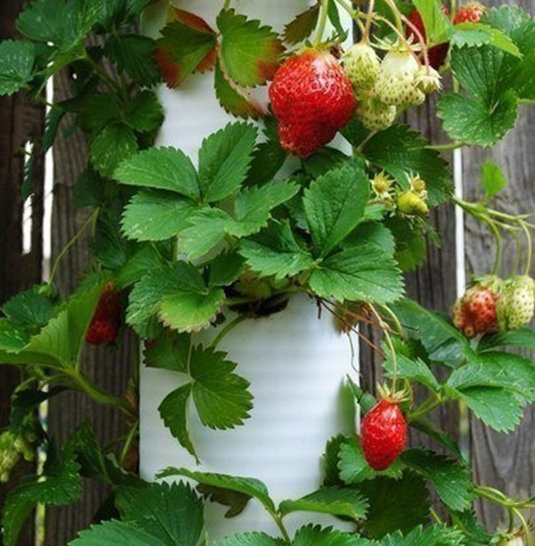 Strawberry Planter Tower